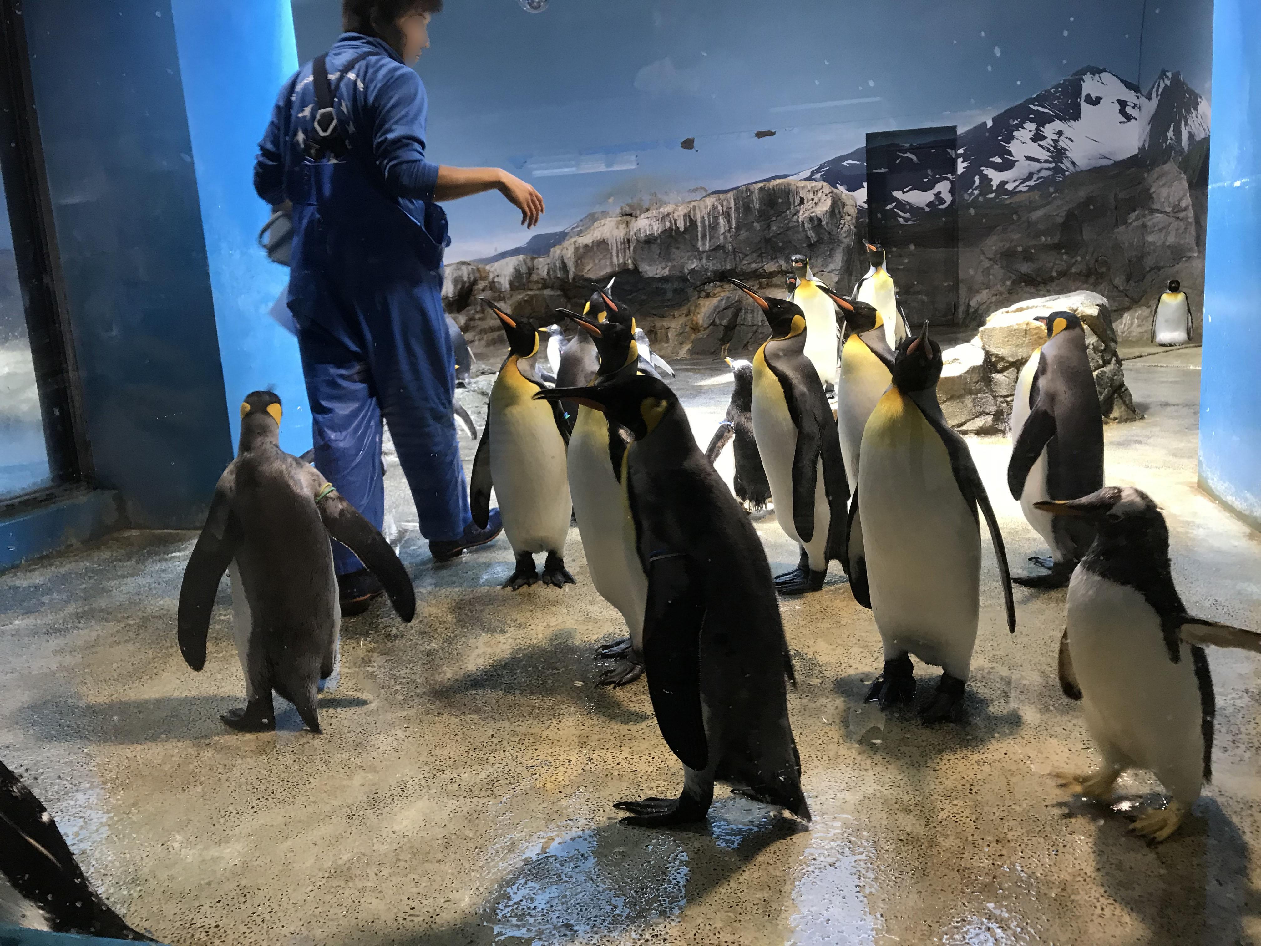 長崎 長崎市 「長崎ペンギン水族館」
