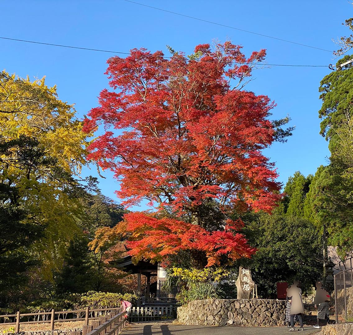 福岡 添田町 「英彦山神宮」